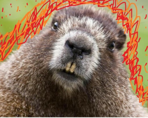 Fire Beavers.png